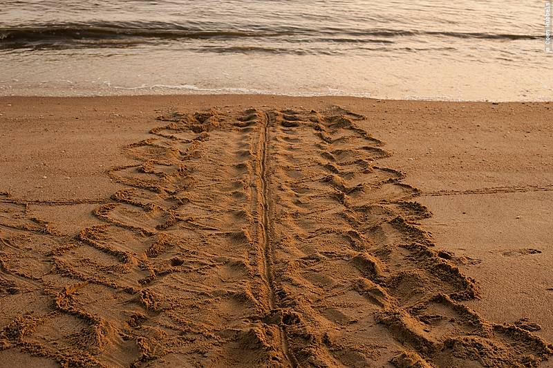 Tracks of a Leatherback, French Guiana (©photocoen)
