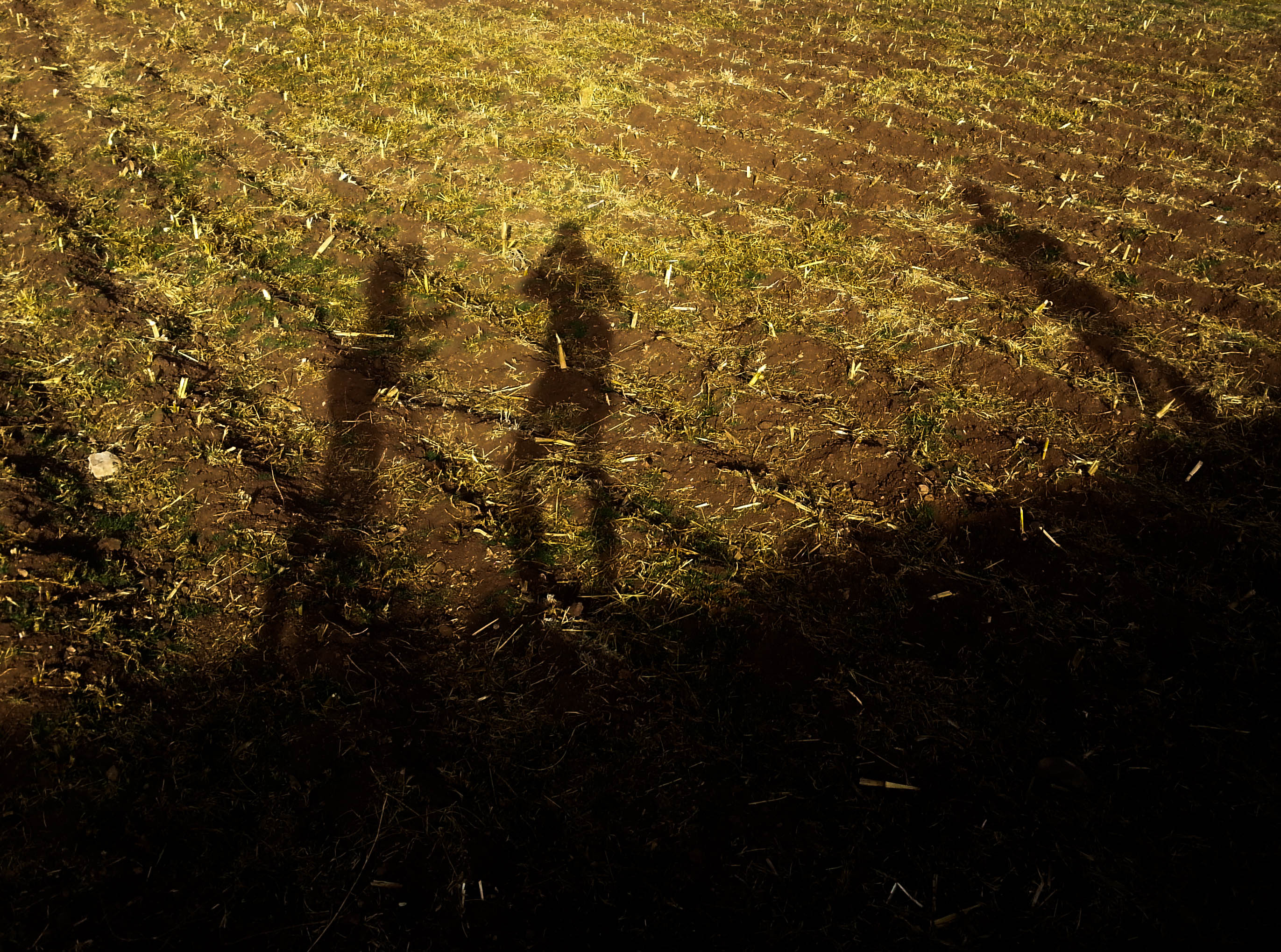 Shadows on Agricultural Field, Peru (©Guy van den Branden)