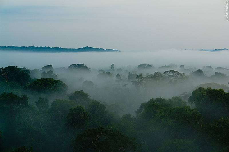 Sunrise in the Brazilian Amazon (©photocoen)