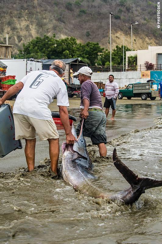 Fish Market in Puerto Lopez, Ecuador (©photocoen)
