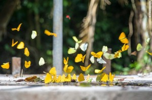 Butterfly Galore in Ecuador (©photocoen)