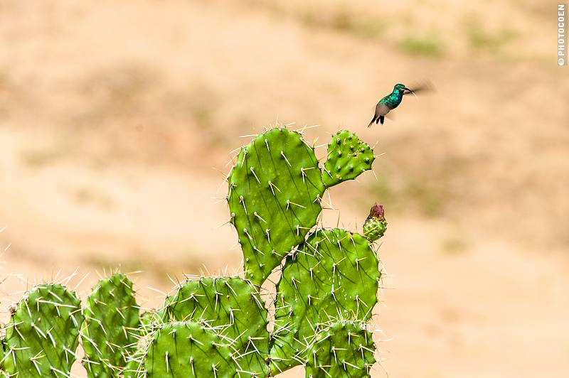 Tatacoa Desert in Colombia (©photocoen)