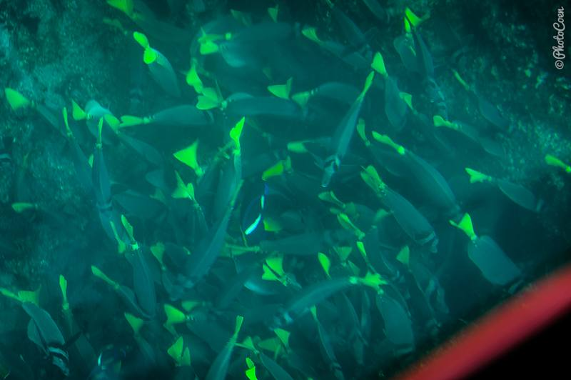 We don't have an underwater camera, but this photo, taken from a glass-bottom boat will give you an idea about the schools of fish.