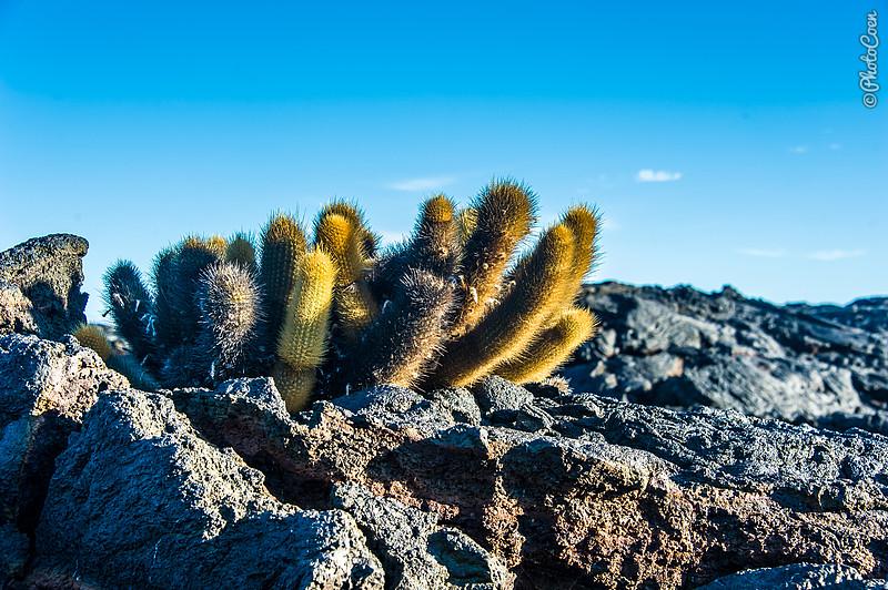 Okay, you may come across a cactus...