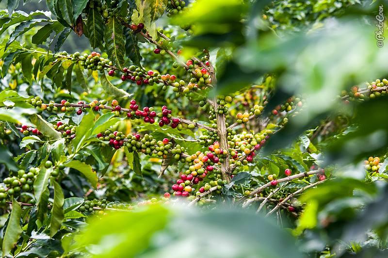 Coffee Beans (©photocoen)