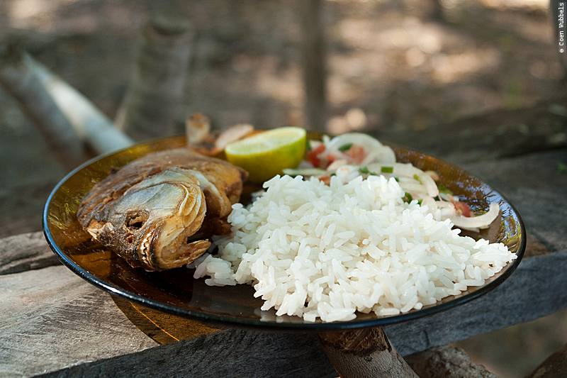 eating piranha do pantanal dish with fried piranha, rice and salad