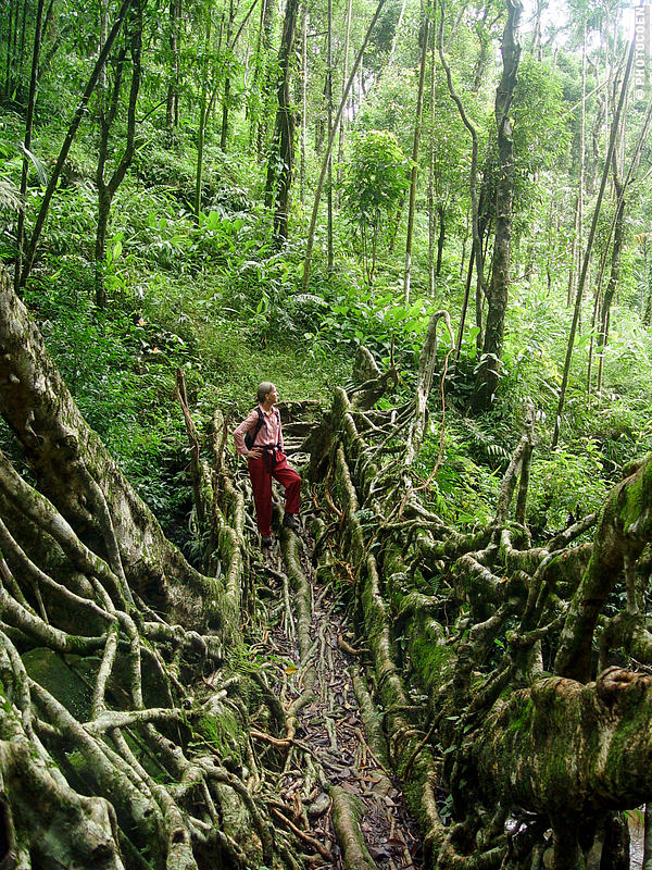 Living-root bridges in India; here, Karin-Marijke standing on a living-root bridge in a dense forest.