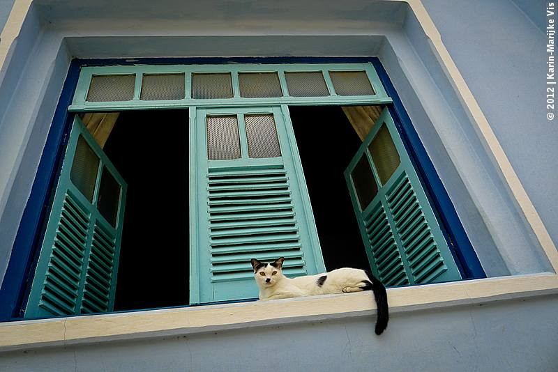 Colonial Town of Goiás Velha: here a white cat on a window sill with green shutters in the background