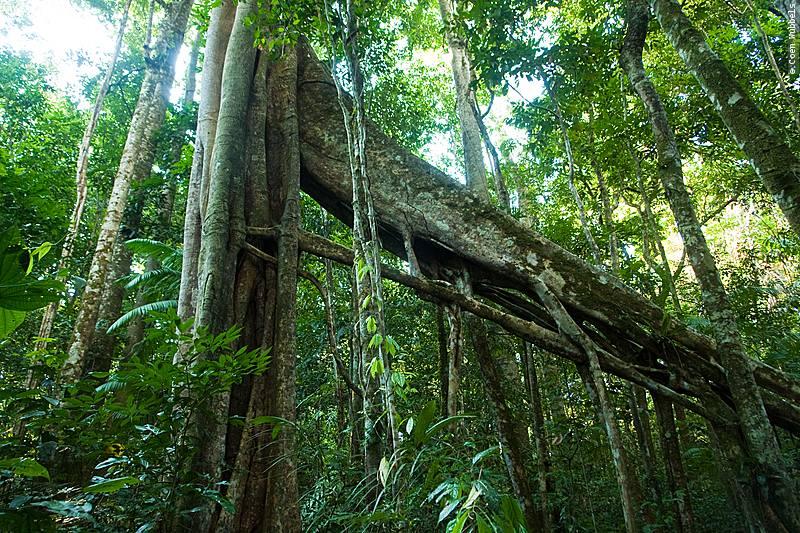 Forest trails in South America: the Brazilian Amazon (©photocoen)