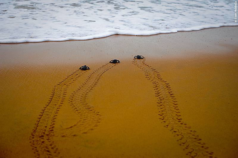 Top travel destinations: watching the hatching of sea turtles (©photocoen)