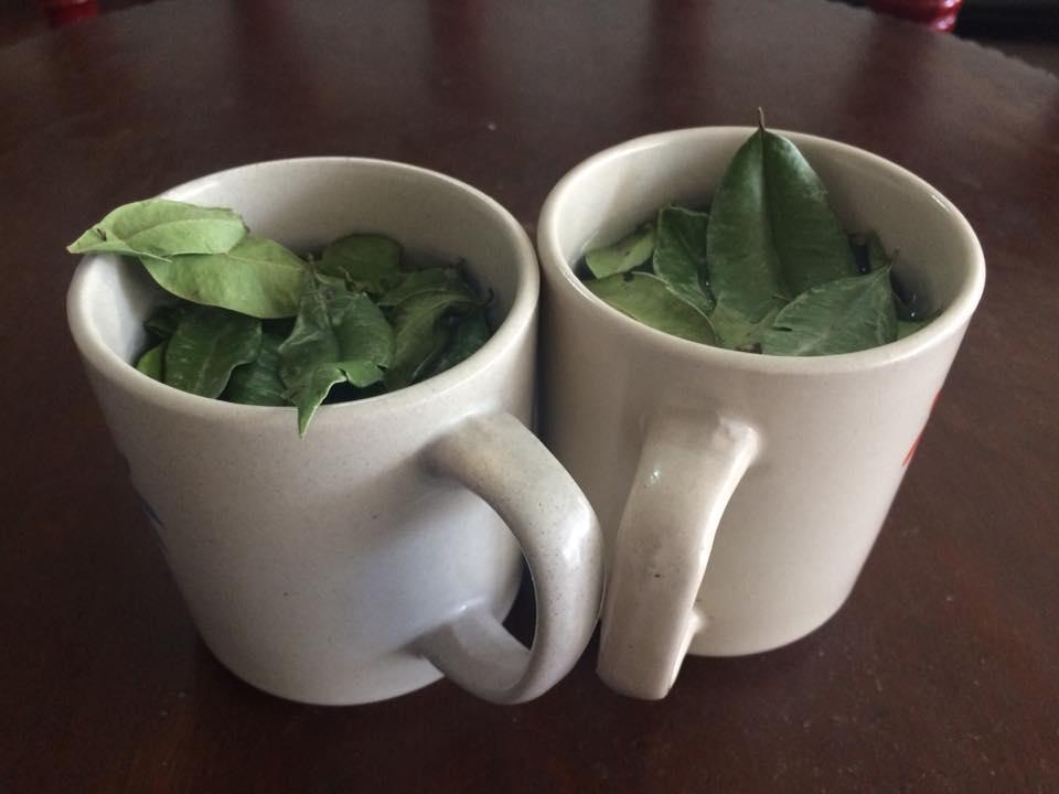 Mountain Tea in the Philippines (©photocoen)
